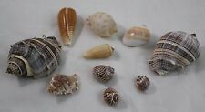 Sea Shell Snail and assorted Lot of 10