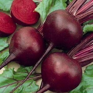 150+ Detroit Dark Red Beet Seeds- NON GMO- Open Pollinated-Organic