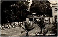Badenweiler Schwarzwald alte Ansichtskarte 1964 Partie im Thermal Schwimmbad