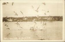 Christmas Cove ME Harbor & Seagulls Real Photo Postcard
