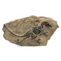 1Pc 34*18cm Resin Dinosaur Fossil Specimen Jurassic Raptor Fossil For Home Decor