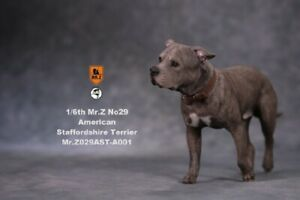 1/6 MRZ029 A001 Animal Pet Model American Staffordshire Terrier Dog Figure