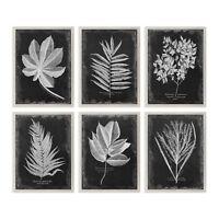 Set 6 Black Silver Vintage Style Leaf Prints   Wall Art Group Floral Botanical