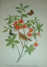 1936 SWAINSON'S WARBLER with Butterflies John James Audubon Print Plate Bird