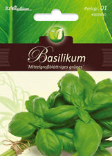 4900830  Basilikum mittelgroßblättriger grün einjährig Samen Gewürze Kräuter