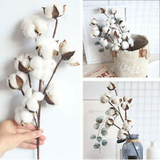 10 Heads Natural Dried Cotton Flower Cotton Stem Floral Branch Artificial Plants