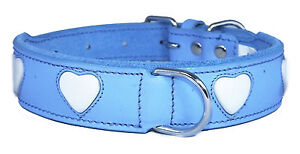 Blue Leather Dog Collar White Heart Staffy Staffordshire Bull Terrier Collar