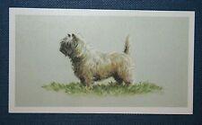 CAIRN TERRIER   Superb Angela Mulliner  Dog Portrait Card