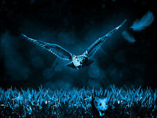 ANIMAL PHOTO OWL HUNTING MOUSE BLUE WALL ART PRINT PICTURE POSTER HP2646