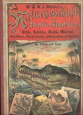 Schubert, Naturgeschichte Reptilien Amphibien Fische Insekten ua m 30 Farbtafeln