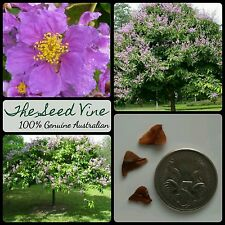 10+ QUEEN'S CREPE MYRTLE SEEDS (Lagerstroemia speciosa) Purple Flower Tree