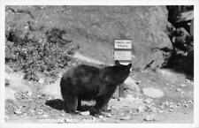 RPPC Yosmite National Park, CA Tenaya Lake Trail Black Bear ca 1950s Postcard