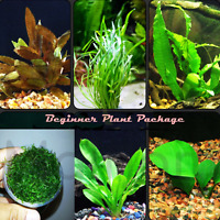 30+ Stems Live Aquarium Plants Bundle Package Starter Beginner Pack Freshwater