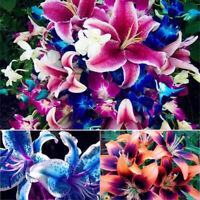 100 gemischte Lilie Zwiebeln Samen Balkon Pflanze Lilium Parfüm Blume Bonsai