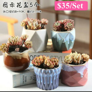 Melting Gloss Glaze 5pcs Cactus Succulent Pots Ceramic Flower Plant pots 5 Color