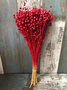 """80 GRAMS BUNCH DRIED FLAX WEDDING FLOWERS ARRANGMENT DECORATION IN RED 18"""""""