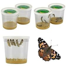 Insect Lore Live Cup Of 10 Caterpillars To Butterflies - Butterfly Growing Kit R