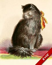 LONG HAIRED BLACK CAT KITTEN PET ANIMAL PORTRAIT ART PAINTING REAL CANVAS PRINT
