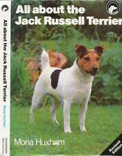 All About Jack Russell Terrier