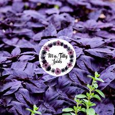 100 Samen Violett Basilikum Dark Opal grosse Blätter Sorte Samen Kräutersamen