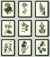 Unframed Botanical Print Set 9 Prints Antique Blue Garden Flowers Wall Art Decor