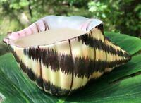P Y Fine China Vtg Nautical Conk Seashell Planter Vase Hand Painted Crown Mark