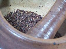 25 graines de MOUTARDE NOIRE(Brassica Nigra)H371 BLACK MUSTARD SEEDS SAMEN SEMI
