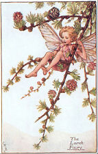 1944 original vintage LARCH FAIRY Mary Barker print