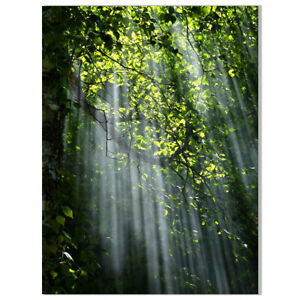 Forest Sunlight Canvas Painting Poster Unframed Picture Home Wall Art Decor