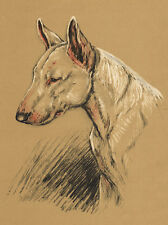 BULL TERRIER CHARMING DOG GREETINGS NOTE CARD BEAUTIFUL HEAD STUDY