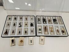 More details for job lot trays of resin set insects and bugs 29 in total entomology #505