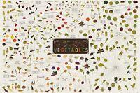 Art print POSTER / CANVAS vintage The Various Varieties of Vegetables