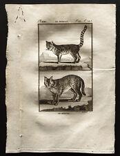 1799 - Buffon - Le serval, le margay - Gravure zoologie