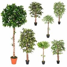 Ficus Potted Trees Flowers