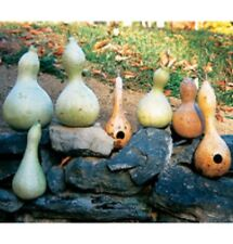 Heirloom BIRDHOUSE BOTTLE Calabash Trumpet Gourd 20 SEEDS Crafts Decorations