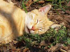 ORGANIC CATNIP SEEDS - Nepeta Cataria Seeds - Felines Love It!!!! -  100 Seeds