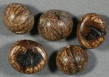 NATURAL PUGAHAN TORN LEAF PALM SEED BEADS 13-14MM (25) BIRD BRAIN