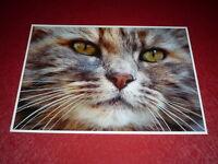 [PHOTOGRAPHIE  - CHASSEUR D'IMAGES] GUY CATEZ (1947-2016) CHAT CAT GATO 42x30cm