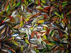 Choose Your Large Lot Of Bill Lewis Rat-L-Traps Rattle Traps Here Lures BAITS