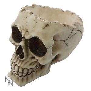 Lobo Skull High Ornament Ashtray Skeleton Gothic Fantasy Skull Nemesis Now