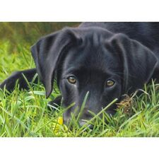 5D Diamond Painting Kits Full Drill Art Embroidery Decors Black Dog Diy Gifts