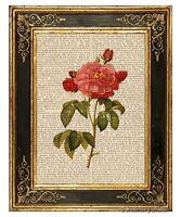 Pink Rose #1 Art Print on Antique Book Page Vintage Botanical Illust Flowers