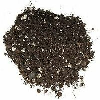 Willow Bonsai Tree Soil - Fast Growth Blend - 100% All Natural