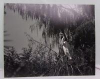 16X20 Original Print Photograph Matted Interior Bird Nature Signed B&W