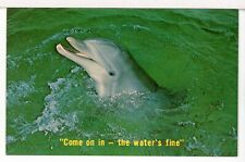 """New listing """"Come on in - the water's fine"""" Invites the Porpoise in Sunny Florida Postcard"""