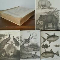 1820 NATURAL HISTORY Cyclopaedia ENGRAVED PLATES Rees ILLUSTRATED Copper SCIENCE
