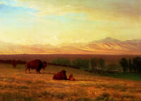 Albert Bierstadt Buffalo On The Plains Fine Art Print on Canvas Reproduction SM