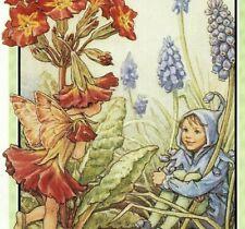 1930 Grape Hyacinth Purple Red Fairy Elf Kids Cicely Mary Barker Print 4257