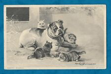 1904 MAUDE SCRIVENER ARTIST DRAWN PC - BOXER DOG AND KITTENS