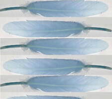 "120 Duck Cosse feathers 4-6"" LIGHT BLUE Goose small quills"